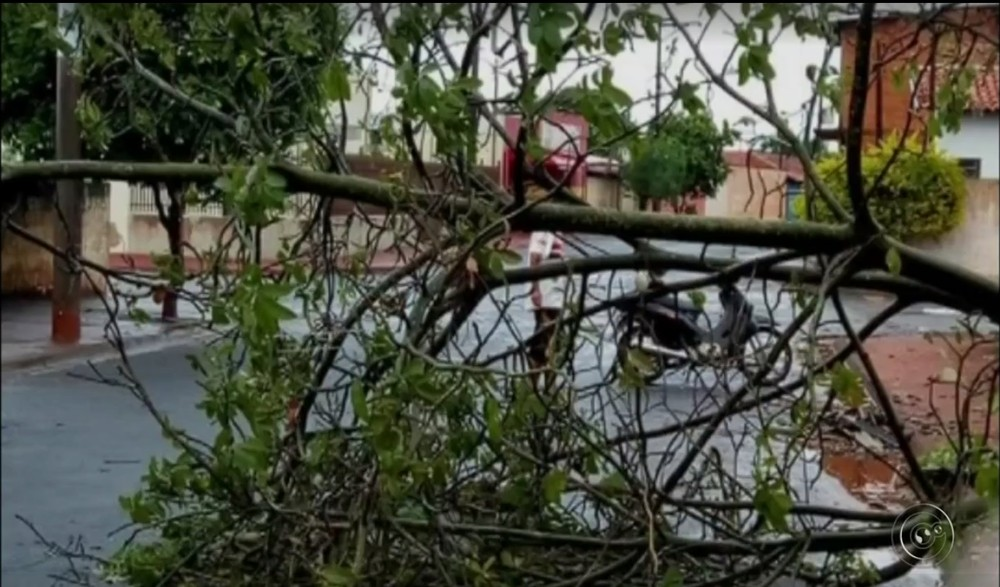Várias árvores caíram em Assis (Foto: Reprodução/TV TEM)