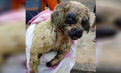 Cadela não resistiu aos ferimentos provocados por ácido em São Manuel — Foto: Arquivo Pessoal