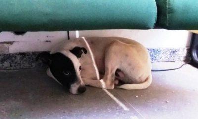 Cachorro foi eletrocutado pelo vigilante dentro de casa no interior do Ceará — Foto: Alex Pimentel