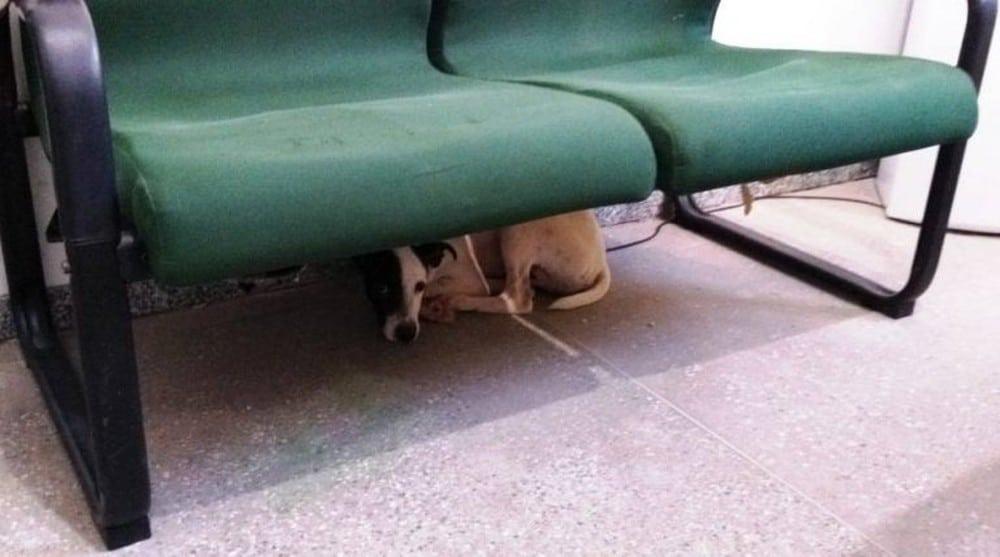Cachorro ficou na delegacia após ser resgatado — Foto: Alex Pimentel/SVM