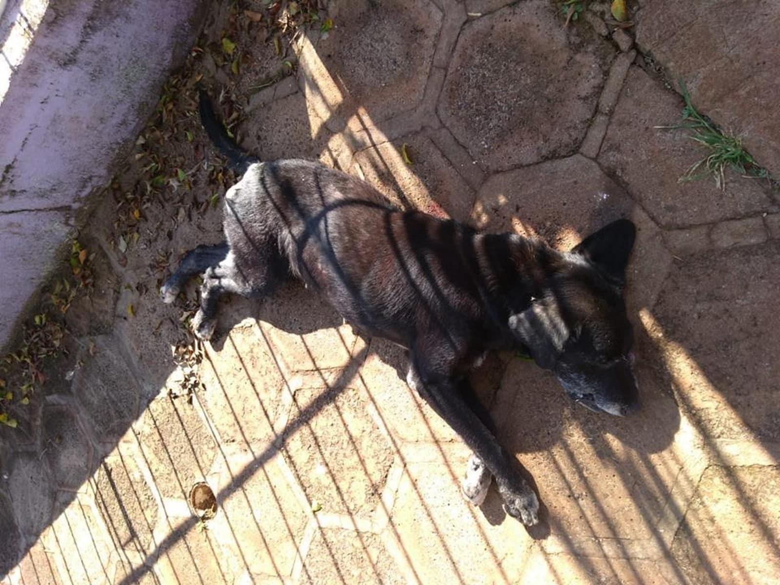 Cachorro foi morto com tiro em São Luiz Gonzaga — Foto: Katyusse Gabert/Arquivo pessoal