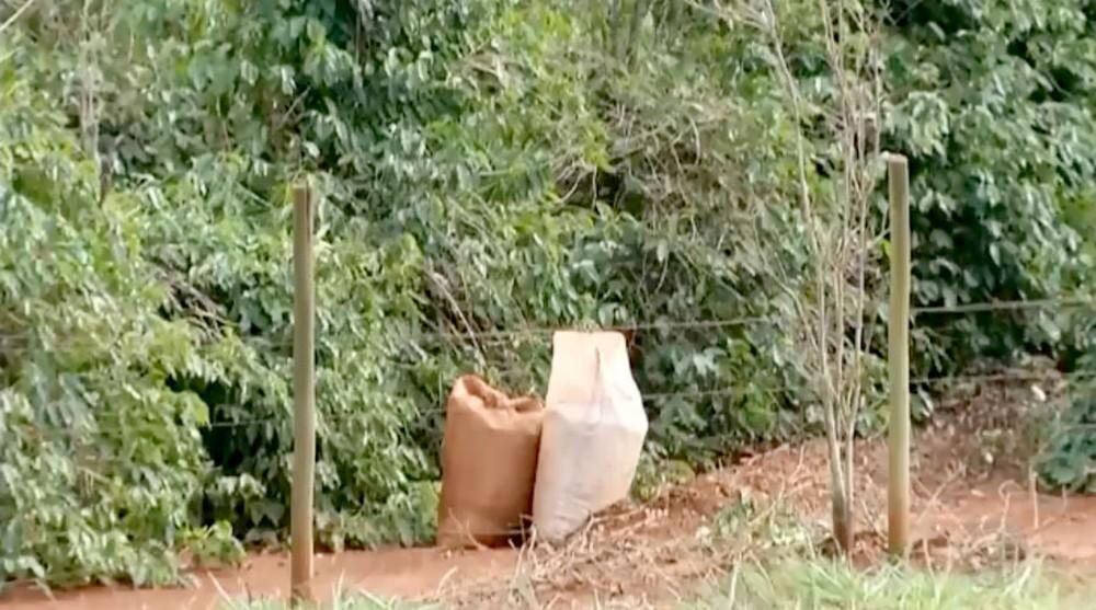 Em algumas fazendas, dupla aproveitava a colheita que já estava feita e aguardava transporte — Foto: TV TEM/Reprodução