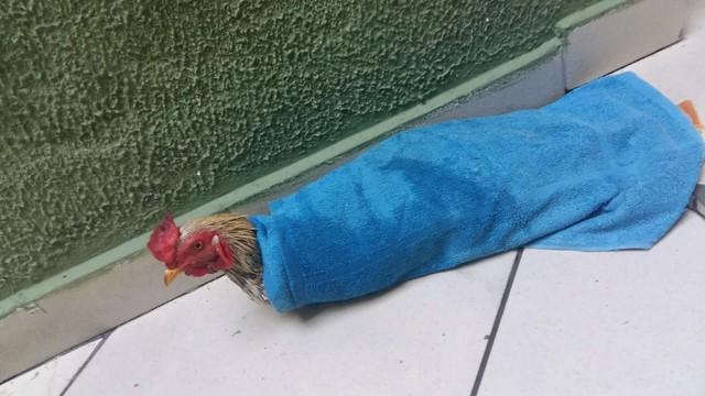 Galileu tem toalha e toma banho uma vez por semana — Foto: Arquivo pessoal