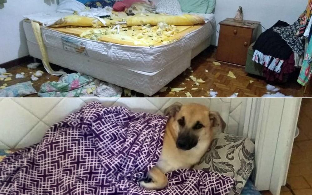 Vira-lata Chico ficou famoso depois de destruir o quarto da dona — Foto: Arquivo pessoal