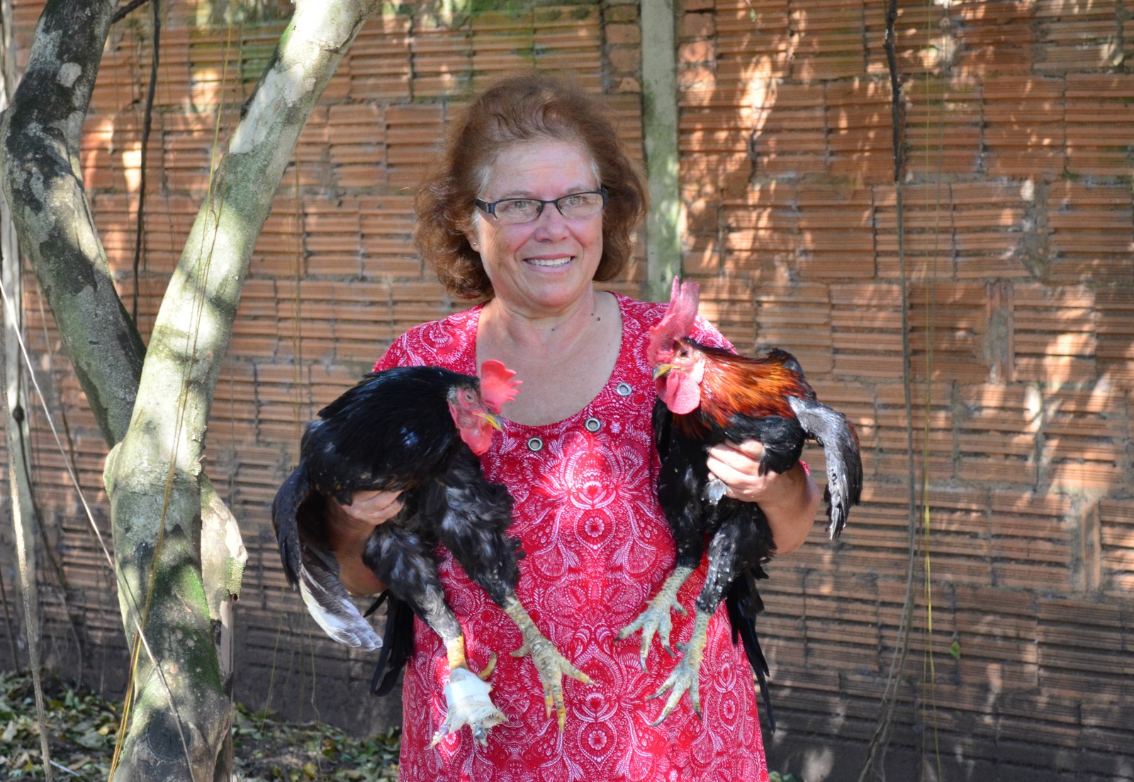 Dora com alguns dos galos que estão incomodando os vizinhos por cantar durante a madrugada (Foto: Fabiana Assis/G1)