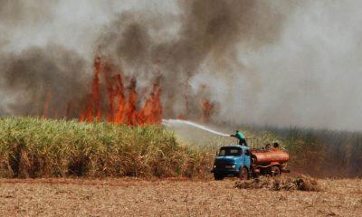 Incêndio destrói plantações e causa acidente em rodovia de Palmital (Foto: Reprodução/Jornal da Comarca)