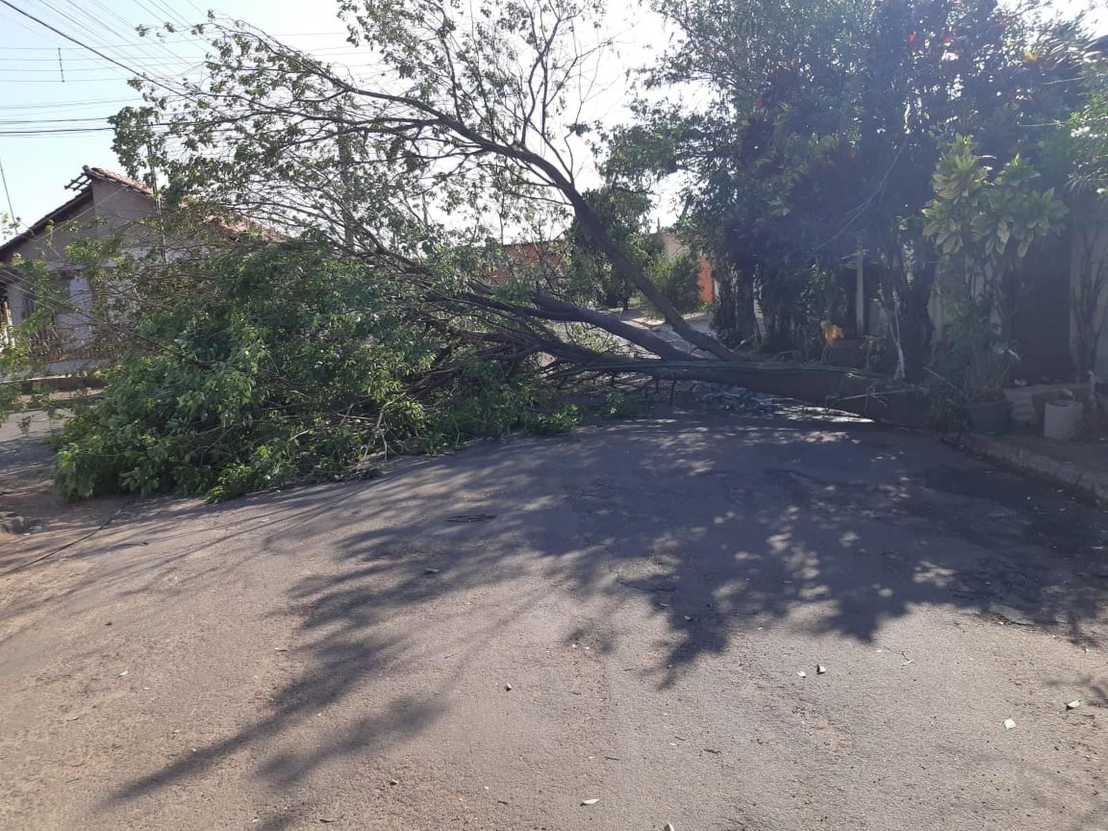 Árvores caíram em vários pontos de Assis por causa da ventania que atingiu a cidade (Foto: Corpo de Bombeiros/Divulgação)
