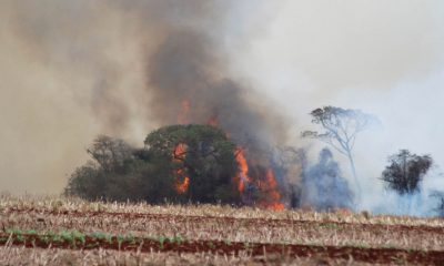 Incêndio destrói área de mata na Zona Rural de Palmital (Foto: Reprodução/Jornal da Comarca)