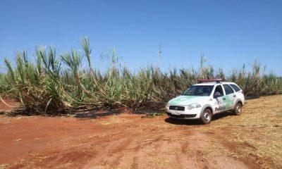 Dono da fazenda foi multado (Foto: Divulgação)