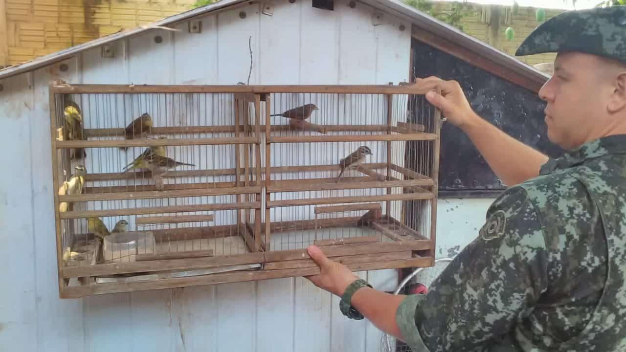 Pássaros foram apreendidos (Foto: Divulgação)