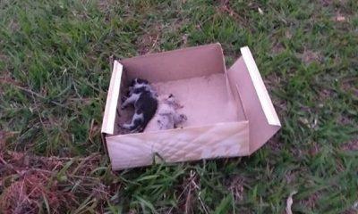 Filhotes de gato morrem após serem abandonados em rodovia (Foto: Reprodução)