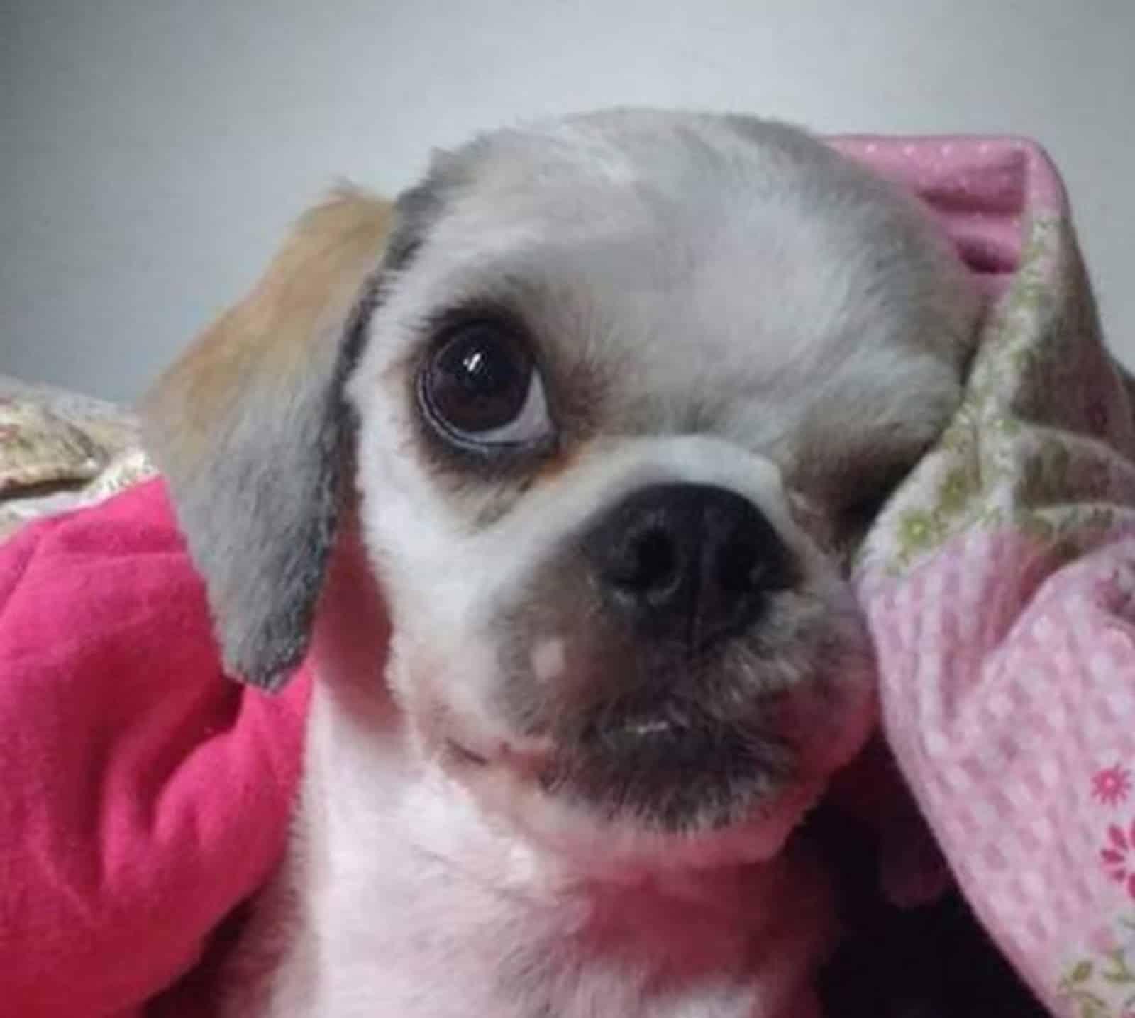Após discussão, vizinho mata cachorro com tijolada (Foto: Arquivo pessoal/Lidiane Silva)