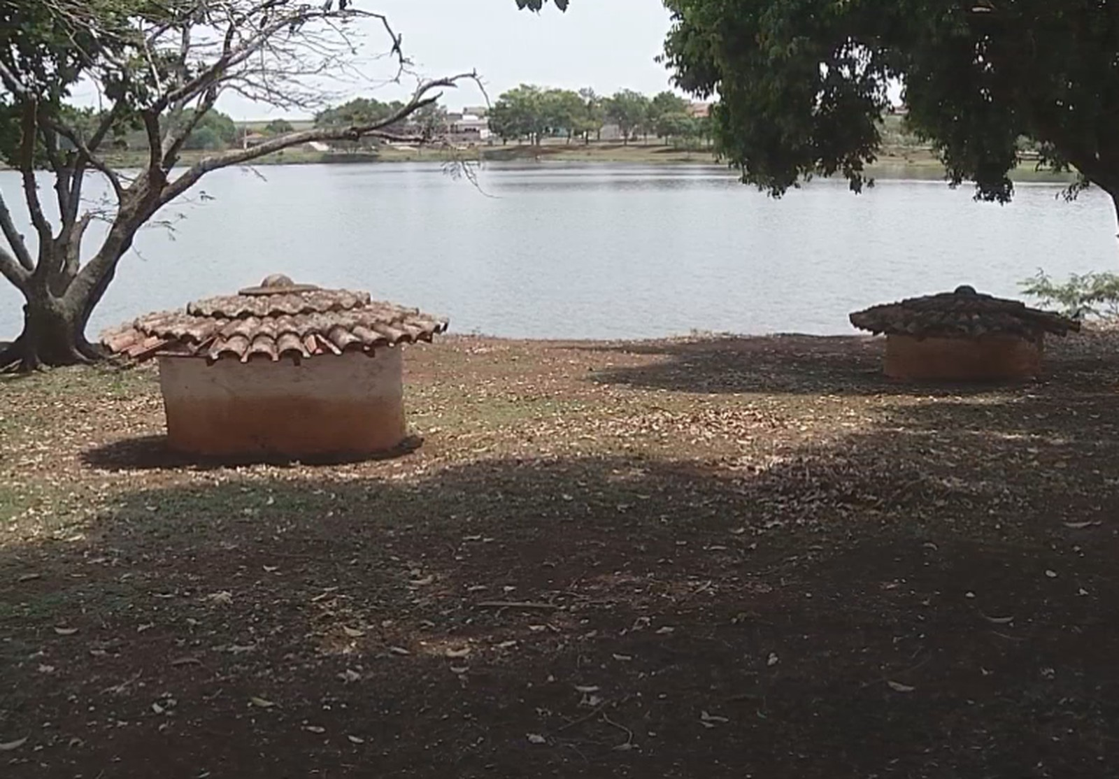 Prefeitura vai contratar empresa para estudar transferência das capivaras do lago municipal de Ipaussu — Foto: Reprodução/TV TEM