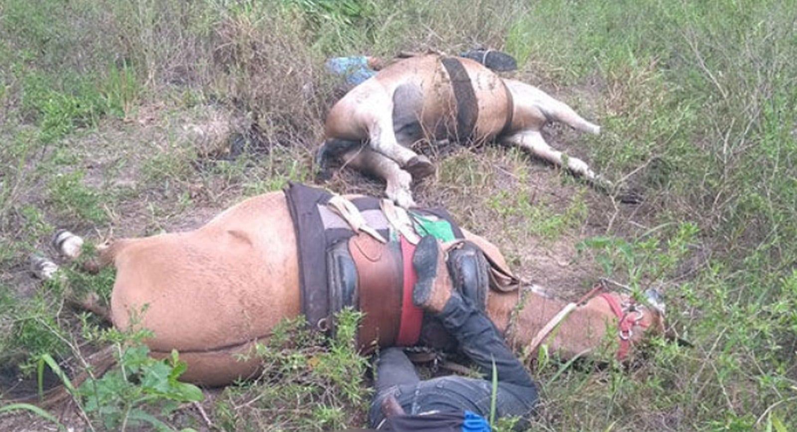 Os cavalos em que os funcionários estavam montados também faleceram (Foto: Reprodução/redes sociais)
