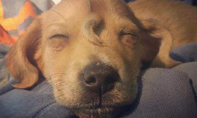 Narwhal: Cachorrinho que possui uma pequena cauda na testa (Foto: Reprodução)