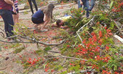 Carteiro fica ferido após ser atingido por árvore em Quatá