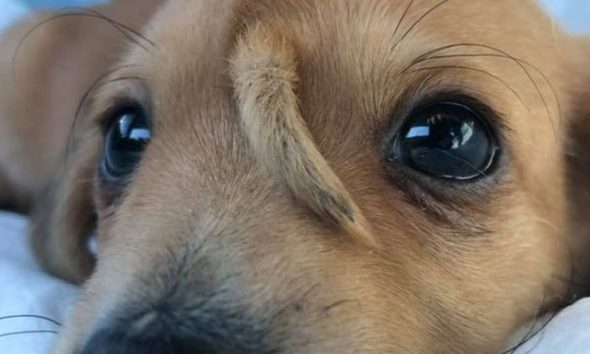 Narwhal foi ao veterinário para checar se estava tudo bem com sua saúde — Foto: Reprodução/Facebook