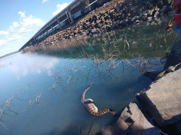 Sucuri de 5 metros é flagrada em rio após engolir uma capivara inteira