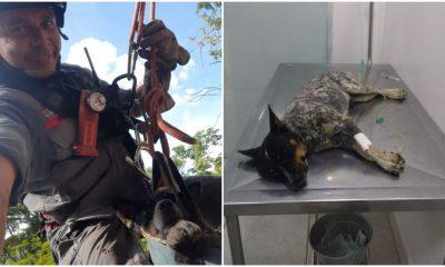 Resgate do cachorro Tico durou cerca de 1h30 em Marília — Foto: Divulgação/Corpo de Bombeiros