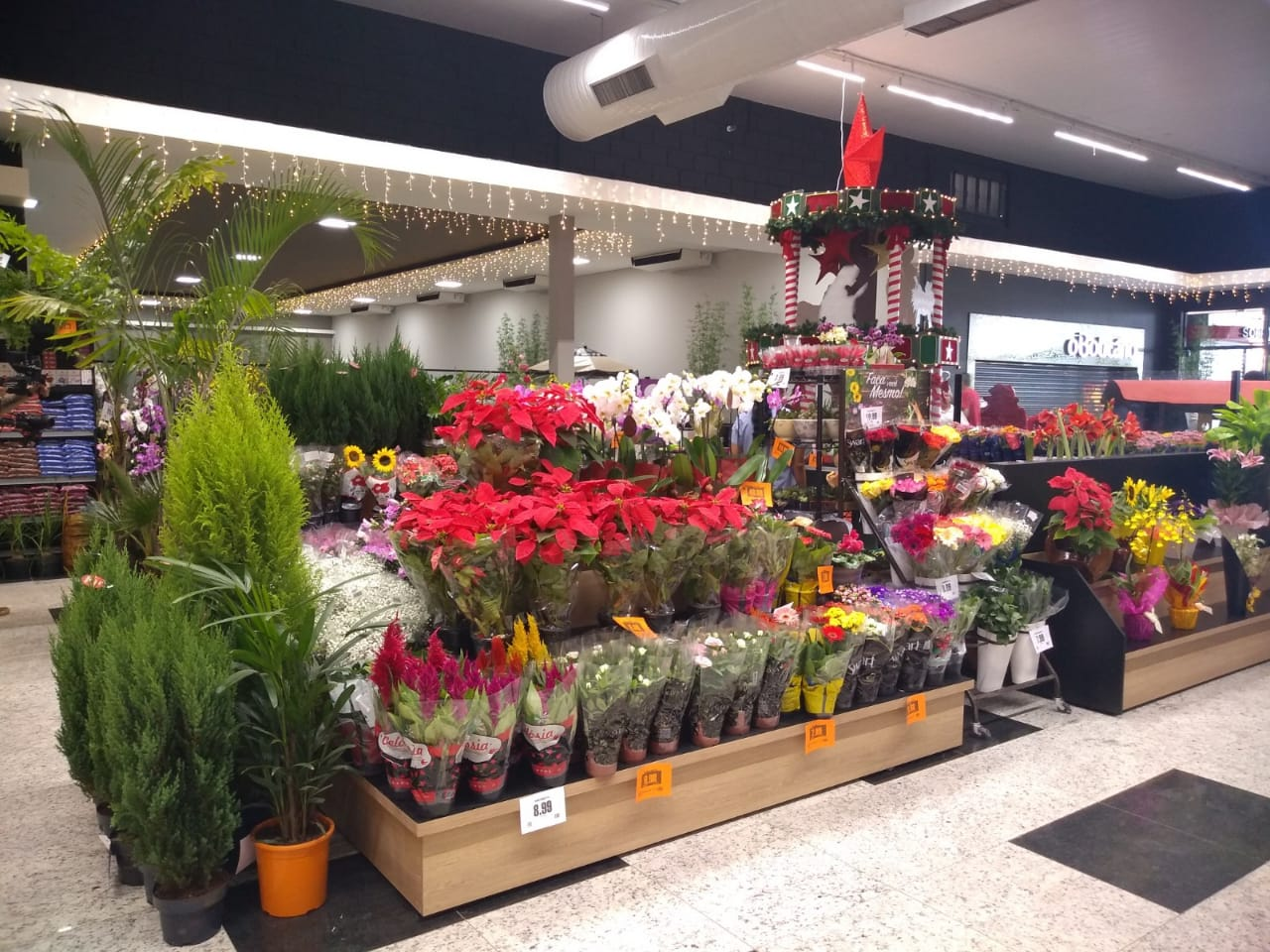 Floricultura Avenida Max (Foto: Paty Ribeiro/AssisNews)