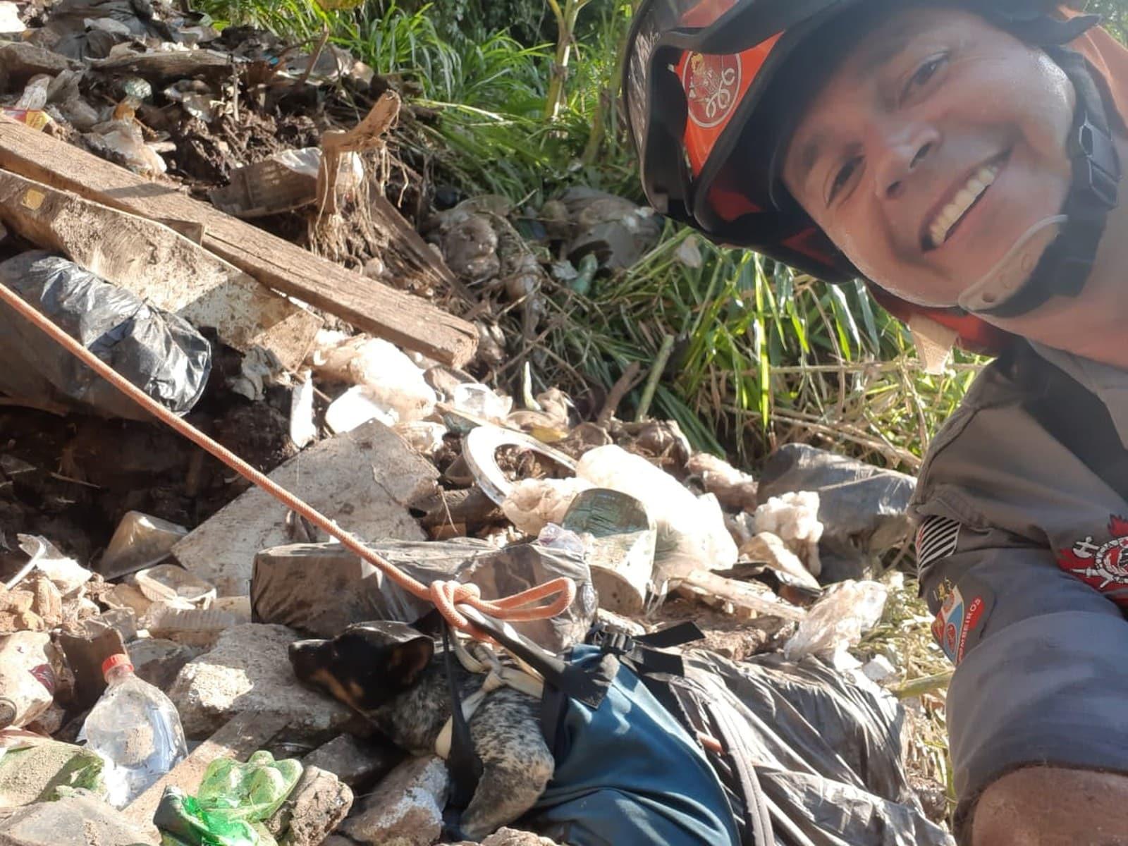 Cachorro foi colocado em um equipamento de segurança durante o resgate em Marília — Foto: Divulgação/Corpo de Bombeiros