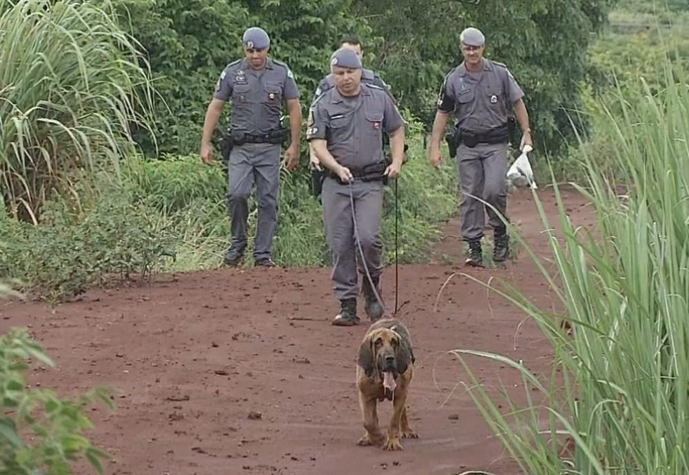 No sábado (11), cão farejador ajudou nas buscas pela menina — Foto: Reprodução/TV TEM