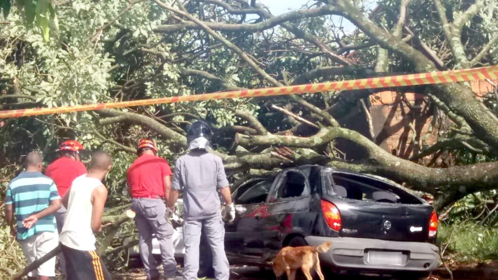 Carro foi atingido por árvore que caiu no bairro Barra Funda, em Paraguaçu Paulista: sem feridos — Foto: Arquivo pessoal