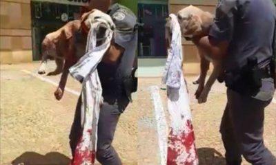 Mulher ataca cachorro com faca e tenta agredir outra pessoa em Jaú — Foto: Polícia Militar/Divulgação
