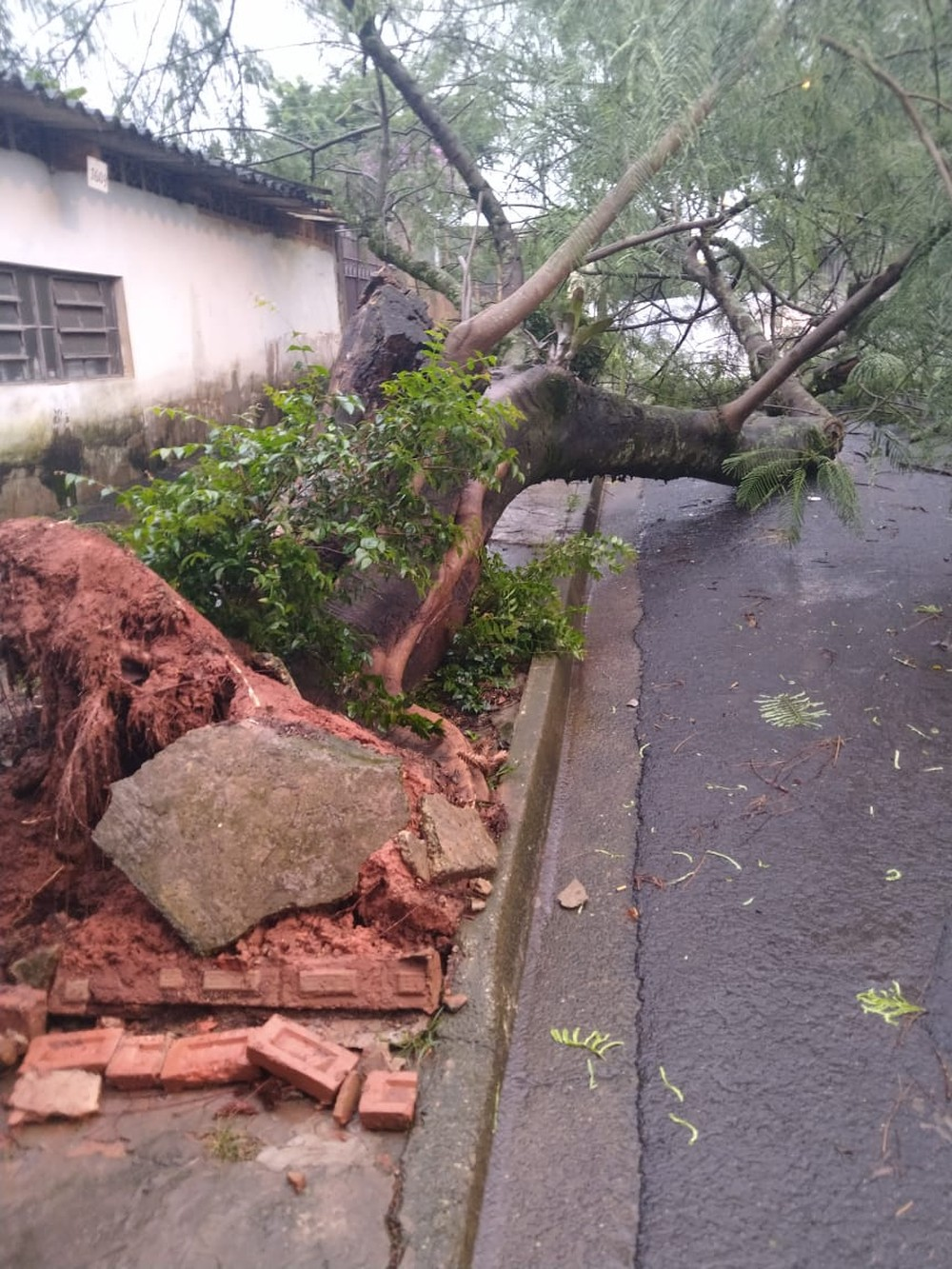 Árvore caiu no Jardim Santa Mônica em Botucatu — Foto: Arquivo pessoal/Geraldo André da Silva