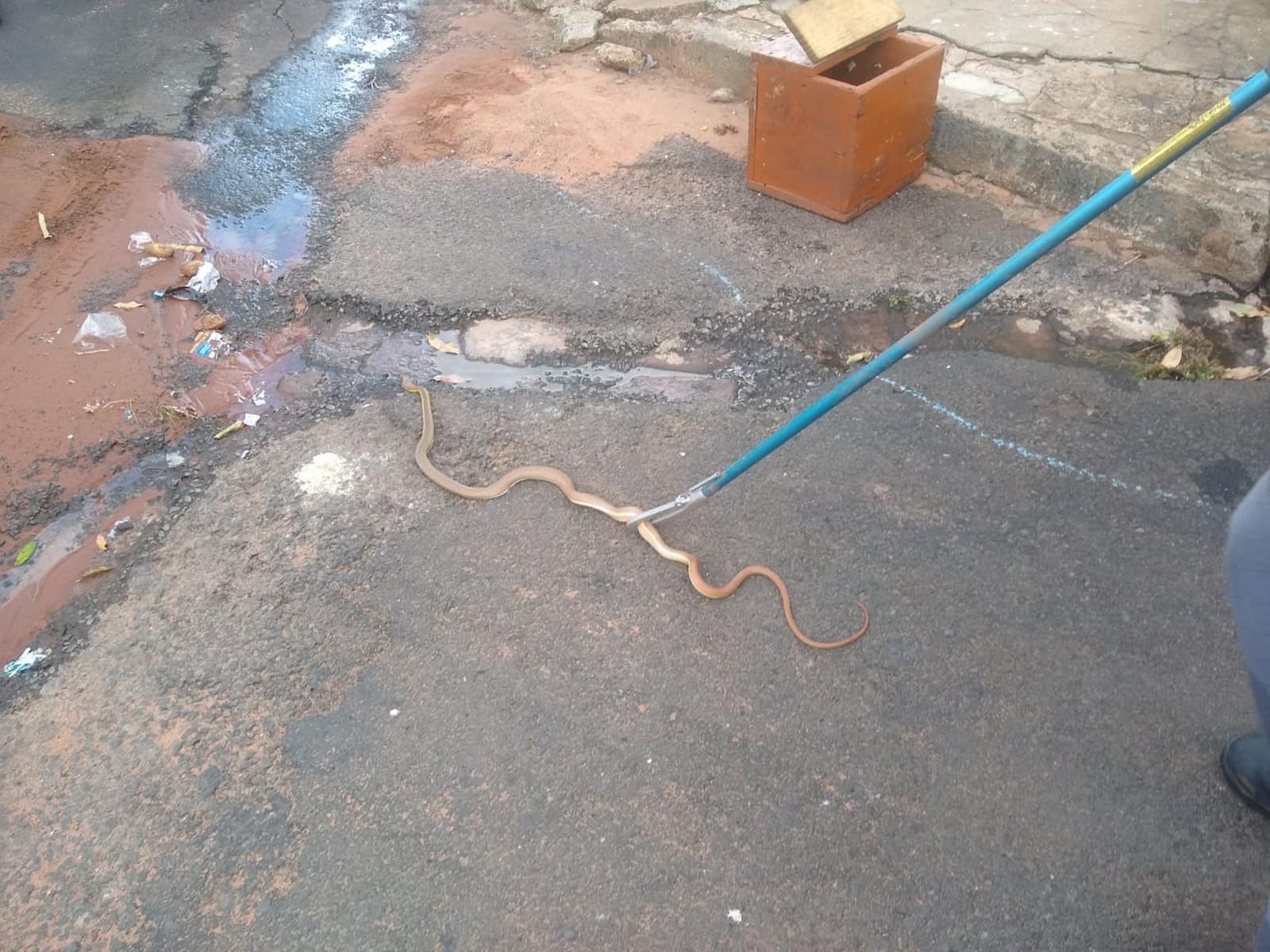 Bombeiros capturaram cobra dentro de caminhão em Rancharia — Foto: Arlei José da Silva