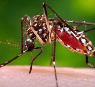 Assis confirma 106 casos de Dengue em 48 horas (Foto: Departamento de Comunicação)