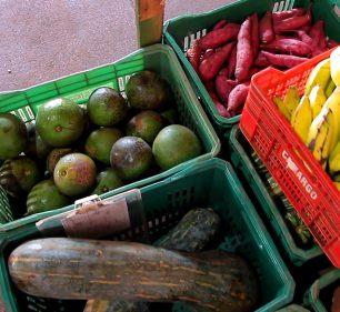 Prefeitura distribui kits de alimentos a alunos da Rede Municipal de Ensino (Foto: Departamento de Comunicação)