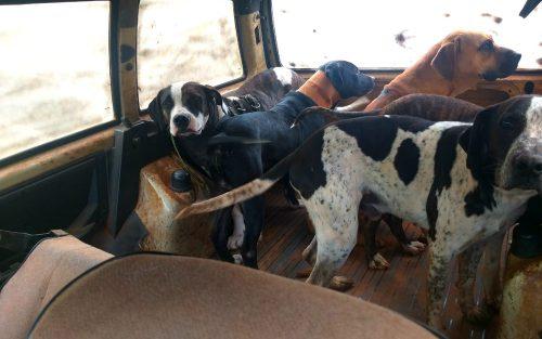 Crime ocorreu neste sábado (23), em Rancharia — Foto: Polícia Militar Ambiental