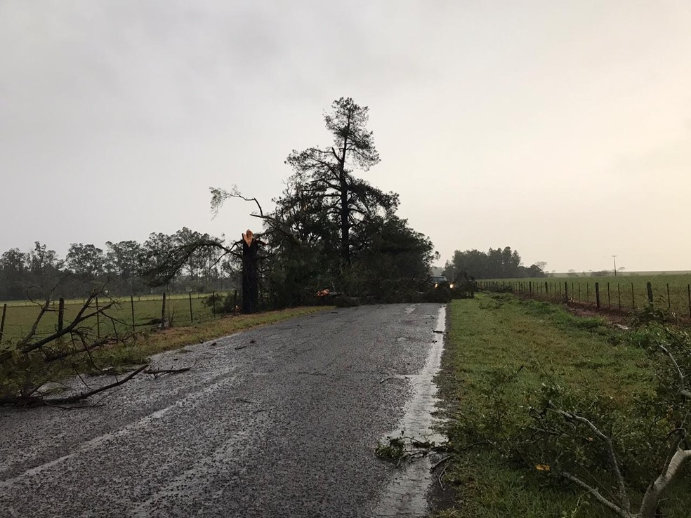 Árvores caíram na vicinal entre Tupã e Varpa e interromperam o aceso ao distrito — Foto: Arquivo pessoal