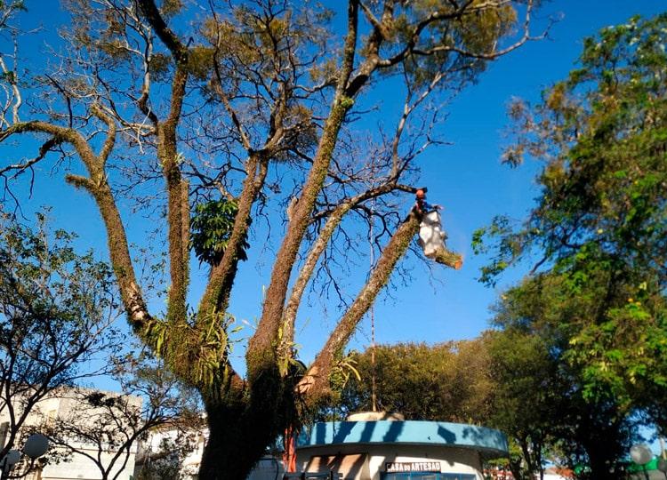 Arvore com saúde comprometida é retirada da Praça Arlindo Luz (Foto: Departamento de Comunicação)