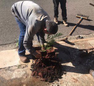 Disque Árvore já atendeu 62 solicitações para plantio residencial (Foto: Departamento de Comunicação)