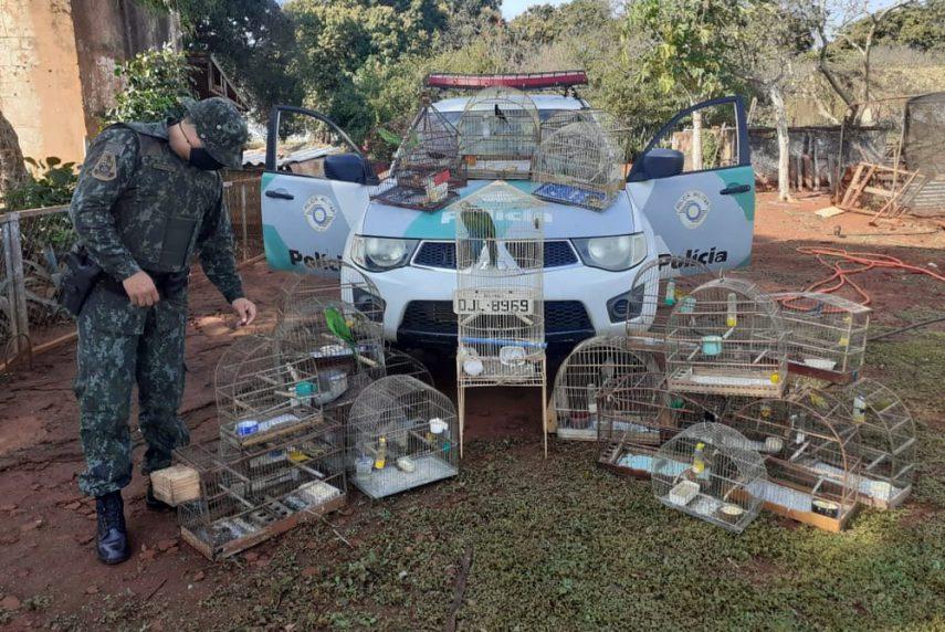 Mulher é multada em R$ 22 mil por manter pássaros em cativeiro em Santa Cruz do Rio Pardo — Foto: Polícia Ambiental/Divulgação