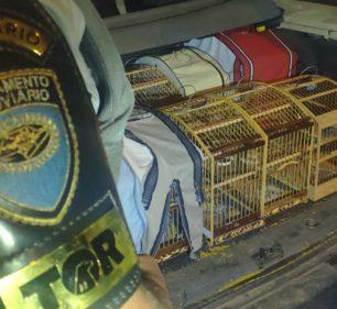 Polícia resgata pássaros silvestres encontrados em gaiolas no porta-malas de carro em Paraguaçu Paulista — Foto: Polícia Rodoviária/Divulgação