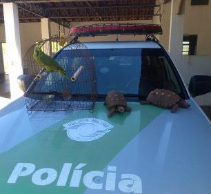 Jabutis e papagaio foram apreendidos pela Polícia Ambiental — Foto: Polícia Ambiental