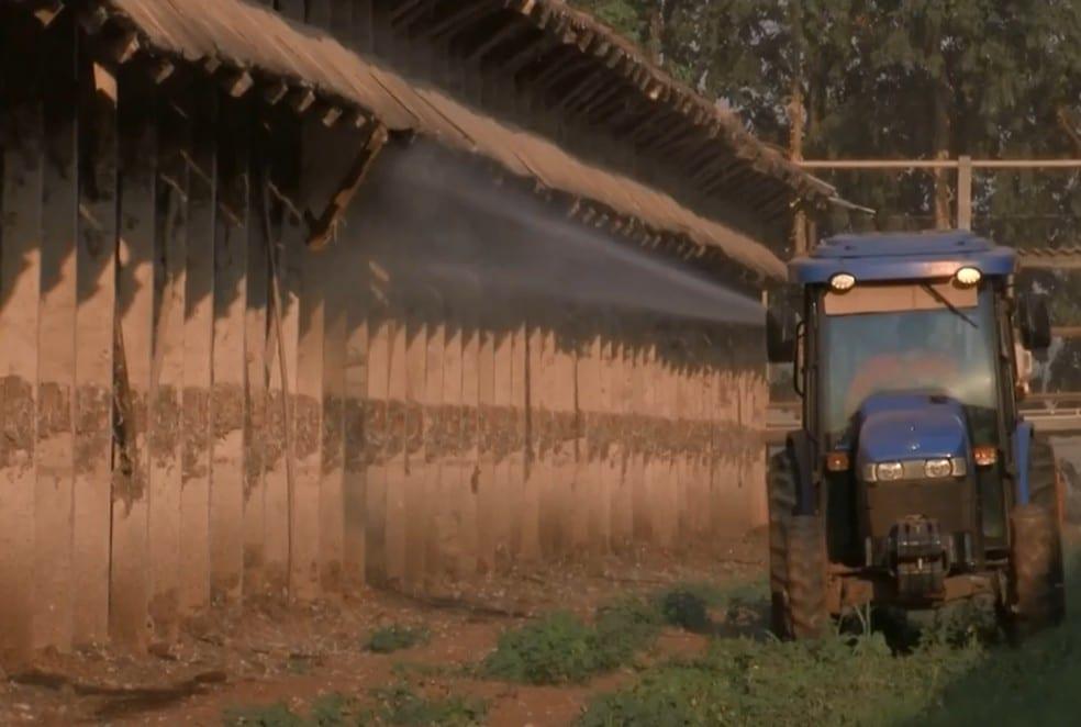 Produtores de ovos de Bastos jogam água e produto à base de eucalipto nas galinhas para amenizar calor (Foto: TV TEM/Reprodução)