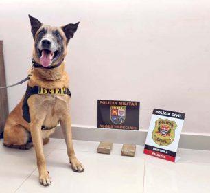 Polícia Civil apreende drogas durante cumprimento de 'mandado' em Palmital