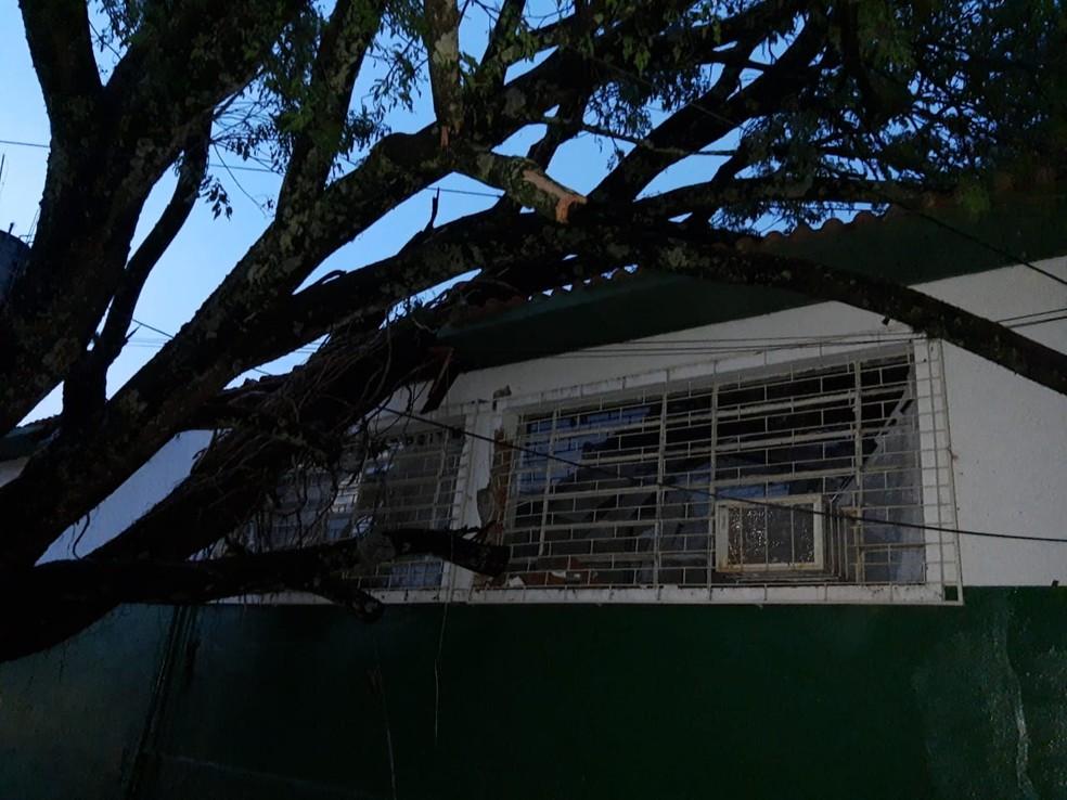 Umas das árvores que caiu em Cruzália atingiu uma escola estadual — Foto: Arquivo pessoal