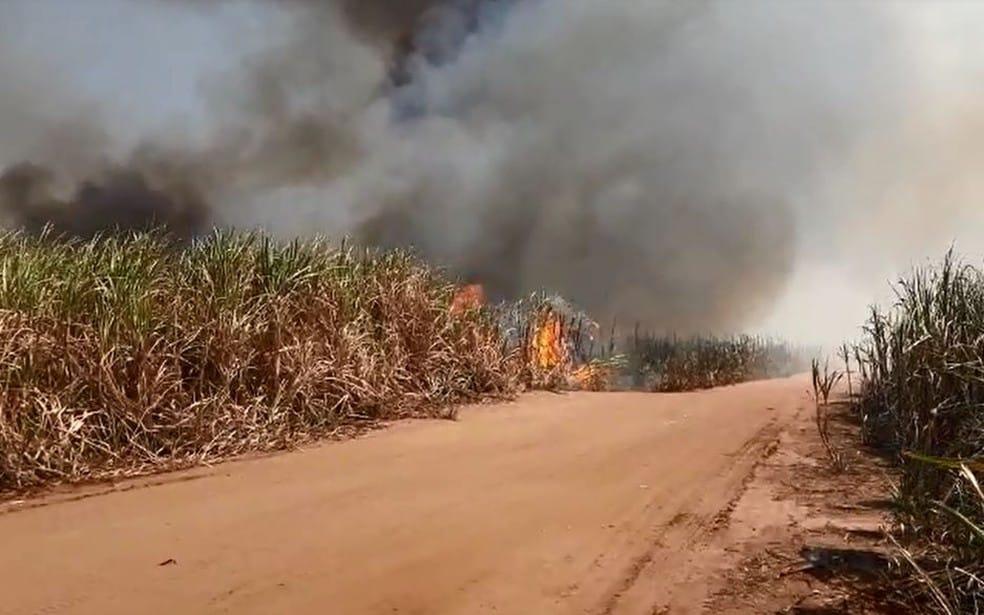 Queimada às margens da BR-153 em Ourinhos (SP) aconteceu nesta terça-feira (7) — Foto: Adolfo Lima/ TV TEM