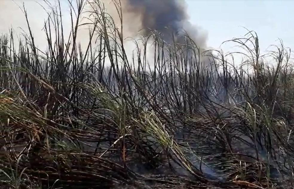 Fogo se espalhou rapidamente em plantação de cana-de-açúcar em Ourinhos (SP) — Foto: Adolfo Lima/ TV TEM