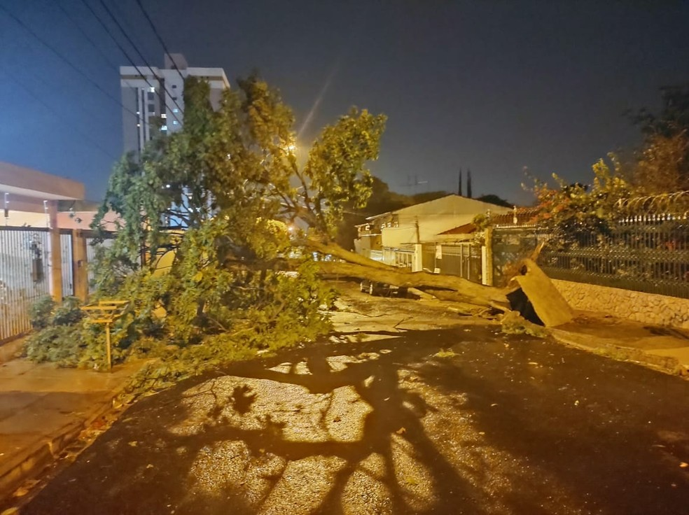 Houve registro de queda de árvores em Bauru — Foto: Arquivo pessoal